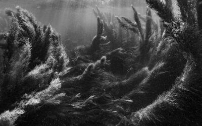 "Fondation Thalie: Nicolas Floc'h ""Invisible, Seascapes"""